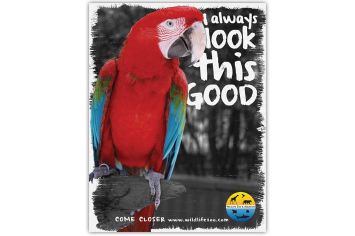 image_Zoo_ParrotAd